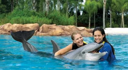 Discovery_Cove_orlando_attractions_american_vacation_living-420x230