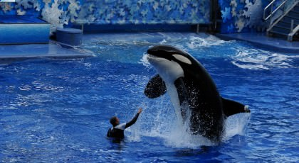 SeaWorld_orlando_attractions_american_vacation_living-420x230