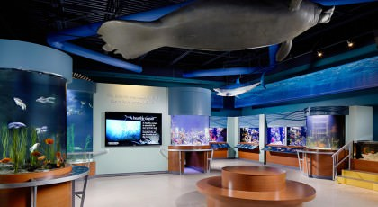 South-Florida-Science-Center-and-Aquarium_PalmBeach-420x230