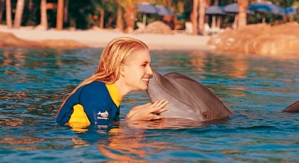 Swim_with_Dolphins_orlando_attractions_american_vacation_living-420x230